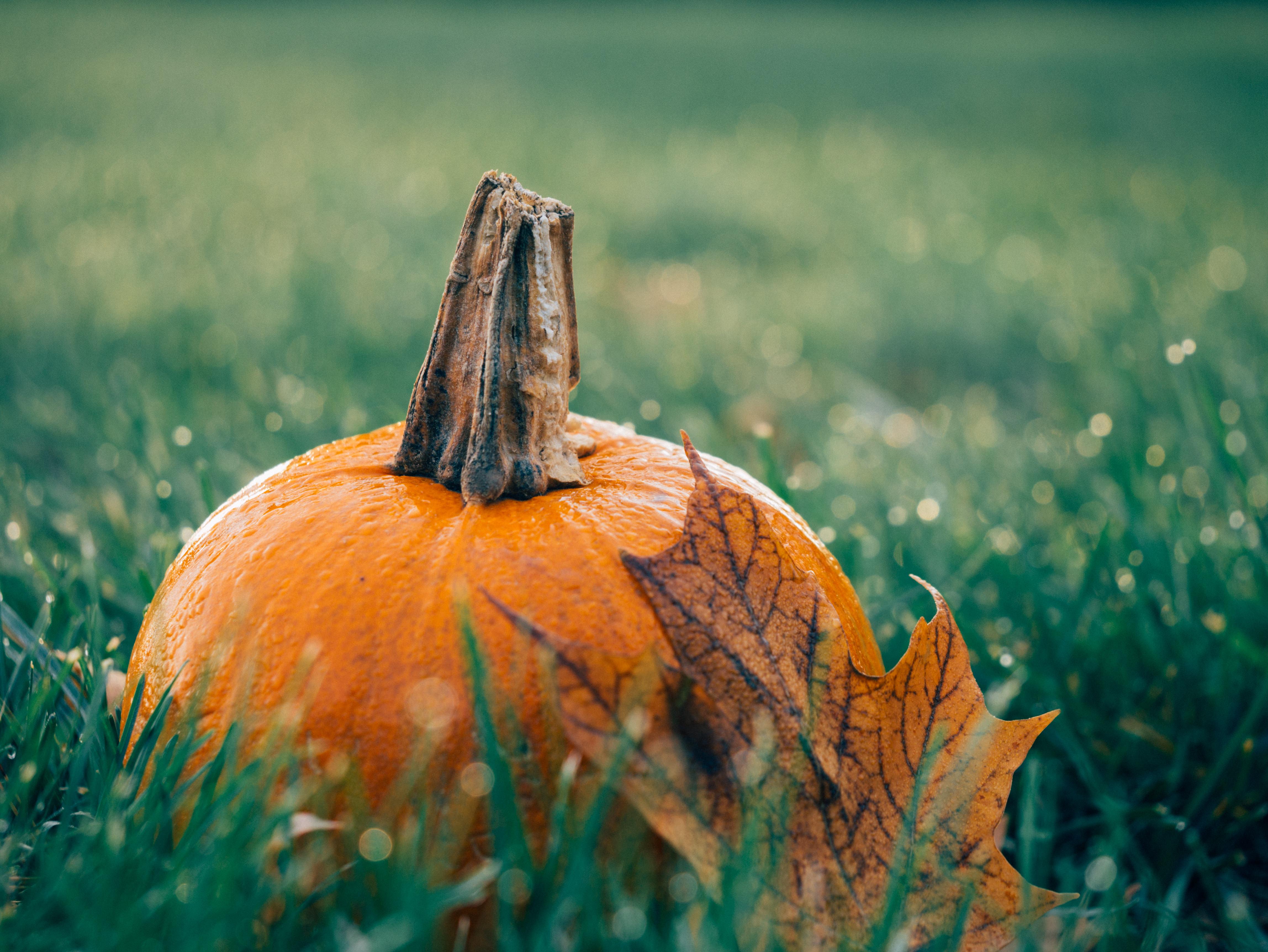 prep garden for spring enter pumpkin decorating contest sep